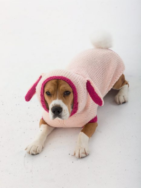 knitting dog sweater
